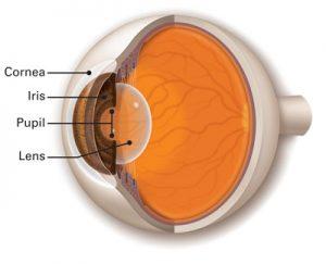 Pupil Iris Lens