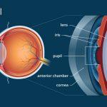 Iris Pupil Lens